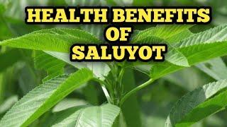 15 AMAZING HEALTH BENEFITS OF SALUYOT OR JUTE | NUTRITIONAL VALUE OF JUTE ( Corchorus olitorius).