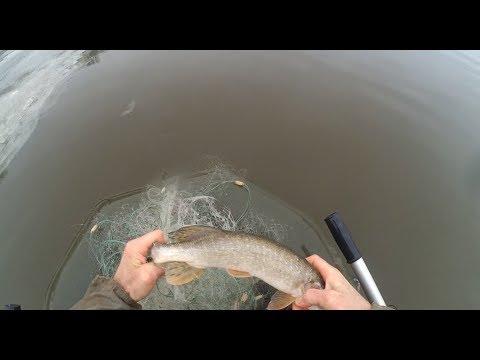 Удачная рыбалка перед ледоставом, выборка сети после пробота