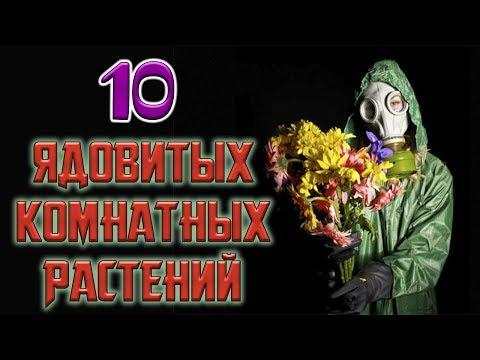 10 ЯДОВИТЫХ КОМНАТНЫХ РАСТЕНИЙ