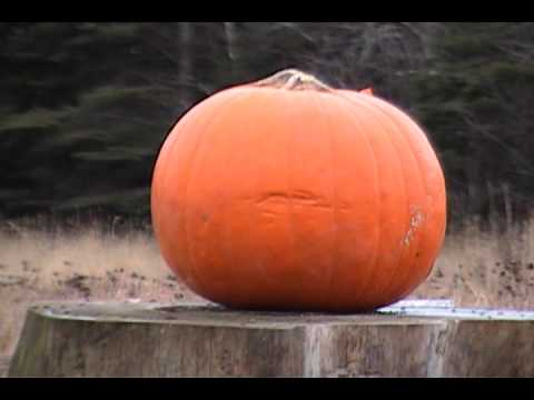 Carving a Pumpkin with a 30-06