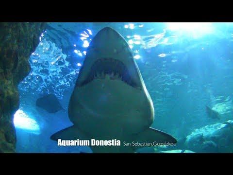 - Aquarium donosti precio ...
