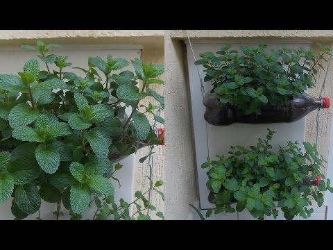 How to Grow Mint-Bottle Garden