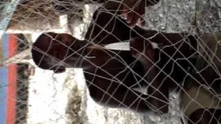 2007 A Fishing Net
