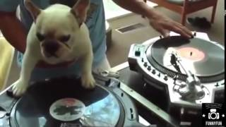 Funny Video Download 2014 Most Funny Jokes Comedy Videos Downloads Comedy And Funny Videos Download