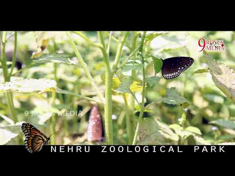 Butterfly world At Hyderabad zoo Park||happy feel good video||9rosesMedia#