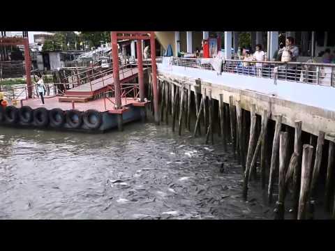 Thailand, Bangkok, Water Bus Stop & psychofishs