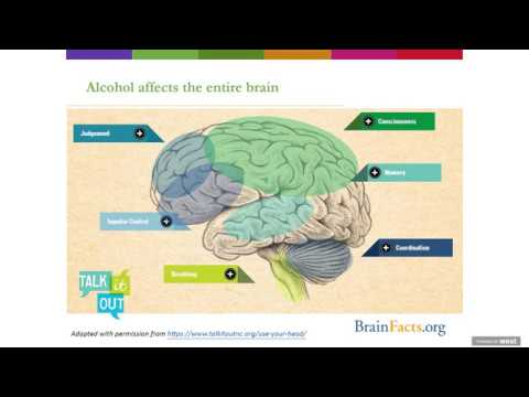 Alcohol and the Teenage Brain