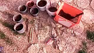 Çelikten köklendirme nasıl yapılır,saksıda,toprakta,dalda