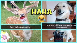 The Funniest Animal Snapchats Ever