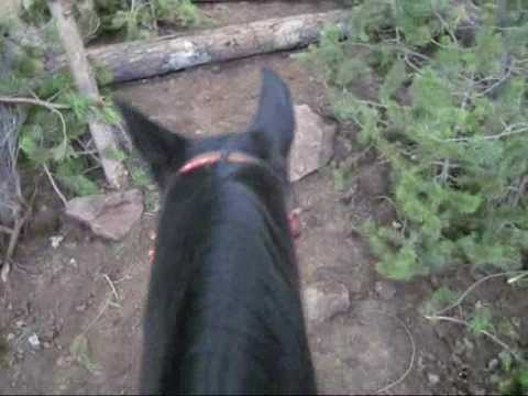 2009 Mountain Trail *Practice* Oregon Horse Center