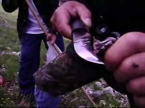 Gjarperi me i helmuar ne evrop