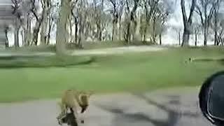 Maymun lar Alemi süpriz