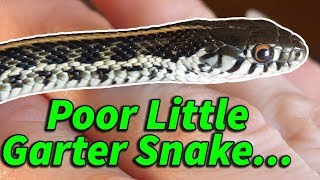 How to Prevent & Help Neurological Issues in Snakes
