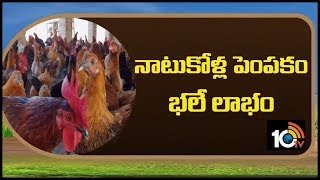 నాటుకోళ్ల  పెంపకం భలే లాభం... | Country Chicken Farming | Matti Manishi  News