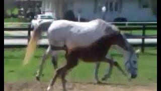 I'm With Conan, foal. Baby horse. Stallion breeding mare.