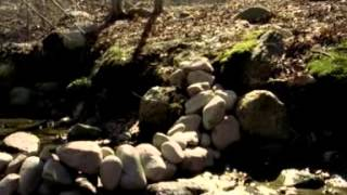 Watch Vines Winning Days video