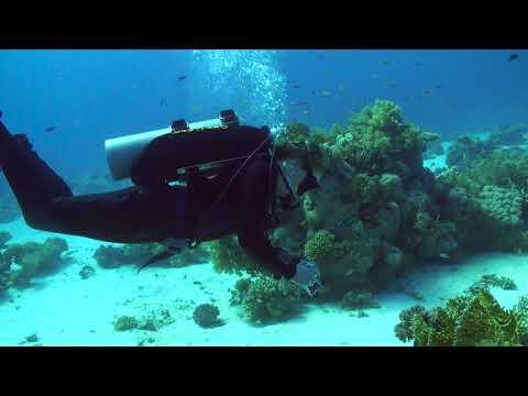 Divers' Weekend