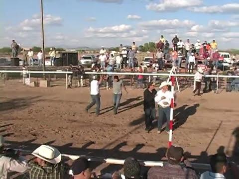 carreras de caballos altar sonora