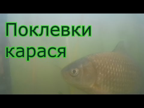 видео ловля карася на скользящий поплавок