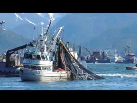 Sitka Alaska Herring Season 2014