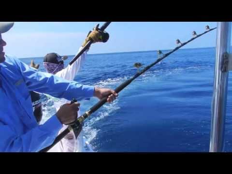Sport Fishing Pez Vela - Costa Rica - PURA VIDA