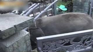 Destroyed in Seconds: Elephants Go Berserk