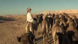 Camel rides through the Desert in Egypt.