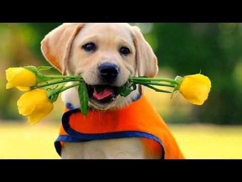 10 те най интелигентни породи кучета