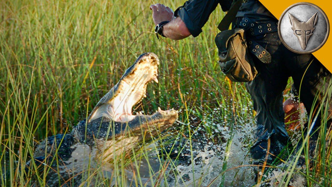 American Alligator Attacks Alligator Attacks Cameraman