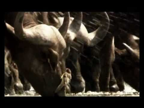 UGANDA 2012 - MORE THAN KONY 2012