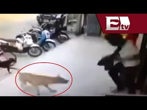 VIDEO: Venganza de perro maltratado / Titulares con Vianey Esquinca