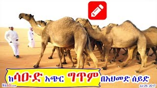 ከሳዑድ አጭር ግጥም በአህመድ ሰይድ - Poem from Saudi by Ahmed Seid - DW