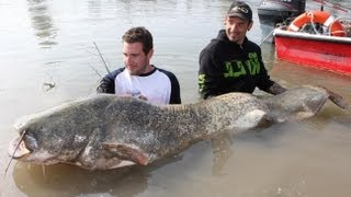 FISHING MONSTER CATFISH WITH LITTLE ROD by CATFISHING WORLD