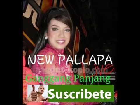 Lagu Dangdut Koplo Terbaru Youtube   New Palapa   Pedih   Bams Mc