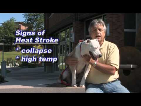 Kootenai Humane Society Pet Health/Safety Tip-heat stroke
