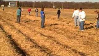 Raking straw March 20, 2009