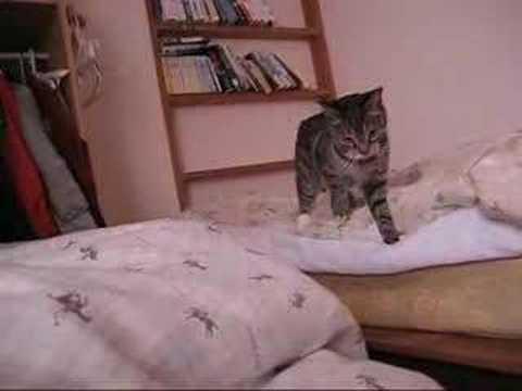 超高速猫パンチ!
