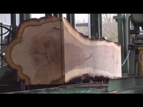 OneOak tree at the sawmill