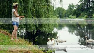 Young woman feeds swans in the summer park pond