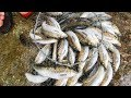 Thả Lưới Bắt 10kg Cá Suối | Hương Sơn Green thumbnail