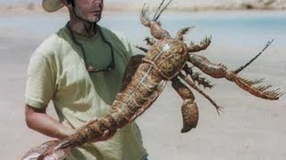 Bizarre Sea Scorpion
