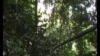 Malaysia - Borneo: Poring