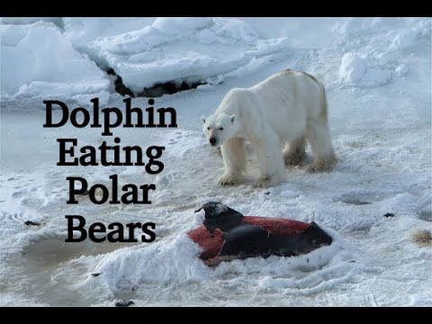 Global Warming: Dolphin Eating Polar Bears