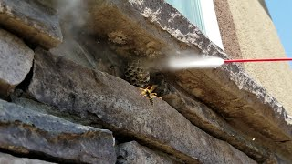 HOW NOT TO GET RID OF WASPS!! (FREEZING, BUG-A-SALT, and ELECTROCUTION!!!)