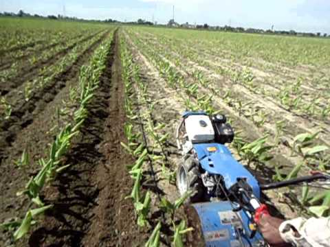 HighYieldTurmeric: Power Weeder at Turmeric seed Farms.