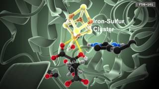 (6.26 MB) How Enzymes Work Mp3