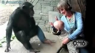 Wild animals vs Childrens