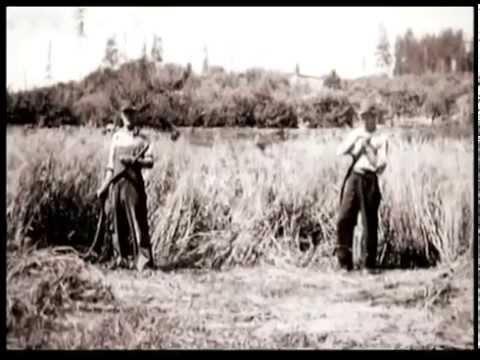 Pioneers of the Peninsula (Short)