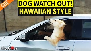 Dog Gets a Car Ride in Style
