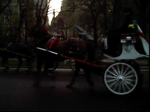 Central Park Carriage Horse Racing and Bucking in Distress- No Water